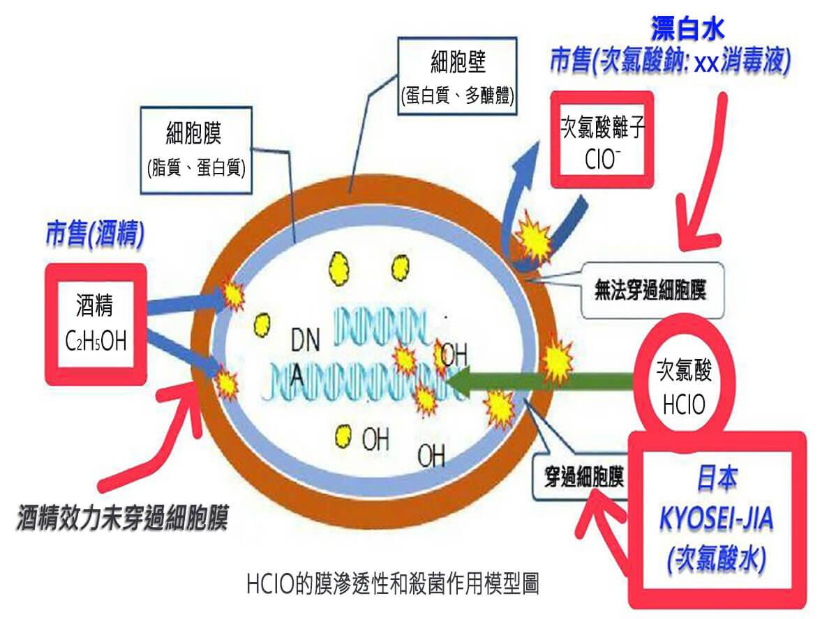 KYOSEI-JIA穿透細胞膜滲透殺菌